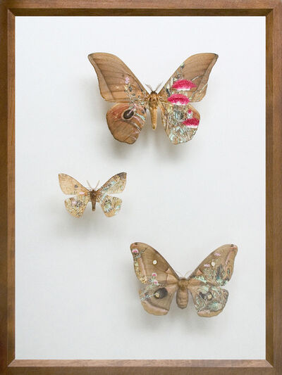 Akihiro Higuchi, 'Collection 0913', 2013