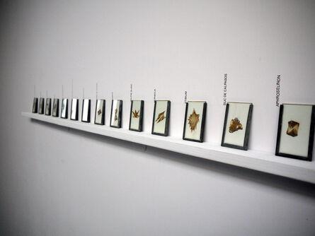 Stéfane Perraud, 'Transmutations d'un même', 2015