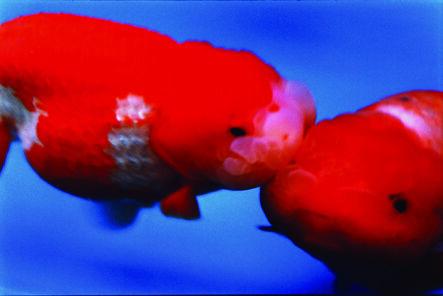 Mika Ninagawa, 'Liquid Dreams', 2003