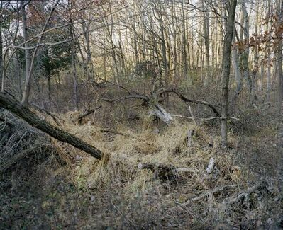 Daniel Valentin, 'Overgrown Tree', 2017