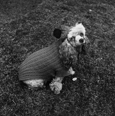 Henry Horenstein, 'Chammie in Wool (Newton, MA)', 1974