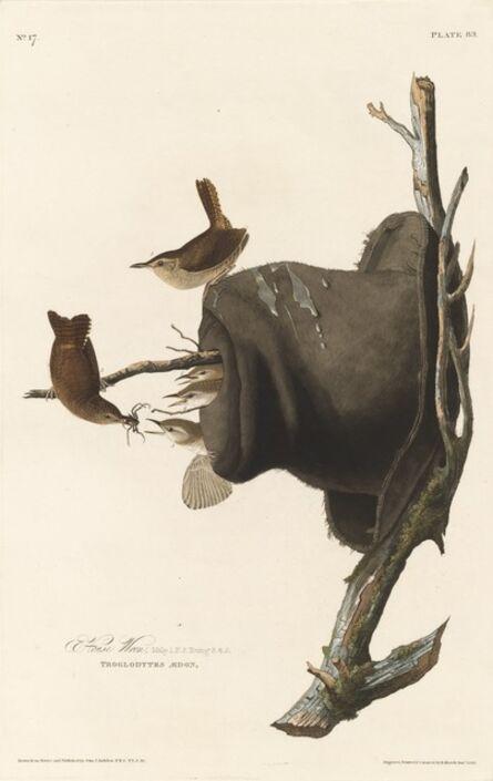 Robert Havell after John James Audubon, 'House Wren', 1830
