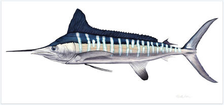 Flick Ford, 'White Marlin', 2017