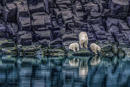 Paul Nicklen, 'The Long Summer', 2007