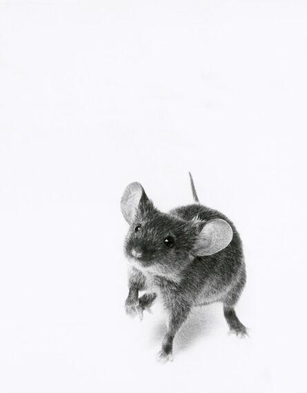 Walter Schels, 'Mouse', 2000