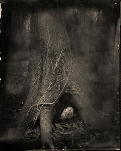 Keith Carter, 'Tree Roots', 2014