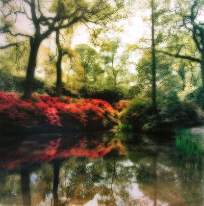 Lynn Geesaman, 'Isabella Plantation, England  (4-09-23c-1)', 2009