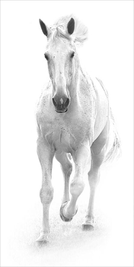 Bob Tabor, 'White horse II', 2017