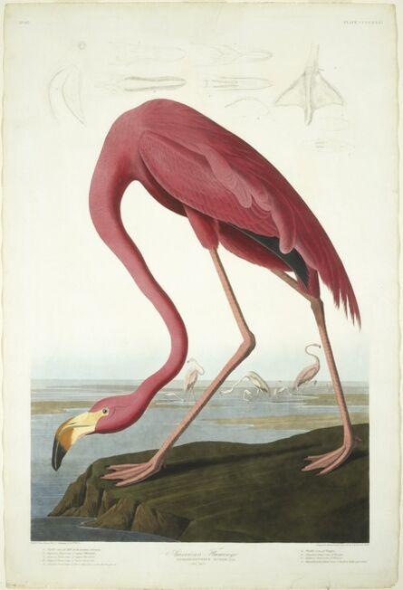 Robert Havell after John James Audubon, 'American Flamingo', 1838