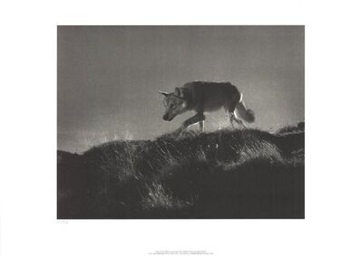 Leni Riefenstahl, 'Wolf in the Film Tiefland', 2002