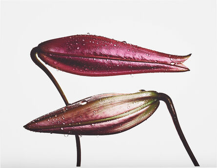 Irving Penn, 'Imperial Pink Bud (top), Imperial Gold Bud (bottom), New York', 1971