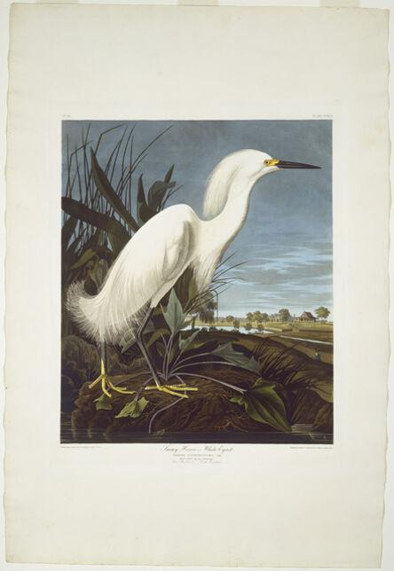 Robert Havell after John James Audubon, 'Snowy Heron, or White Egret', 1835