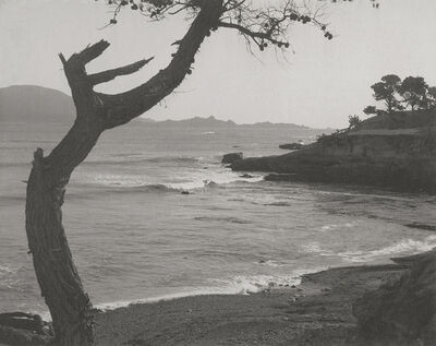 William Edward Dassonville, 'Tree Along Coast', 1920s / 1920s