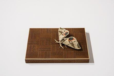 Toru Fukuda, 'Uchisuzume (Oriental Eyed Hawkmoth)', 2016