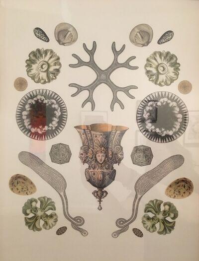 "Adrienne Slane, '""Origins: Diatom""', 2017"