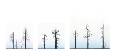 Greg Rose, 'Eight Burnt Trees, Crystal Lake', 2012