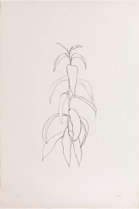 Ellsworth Kelly, 'Peach Branch', 1974