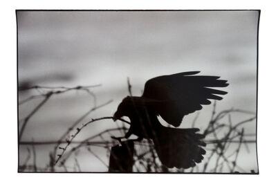 Masahisa Fukase, 'Erimo Cape', 1976