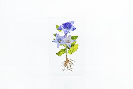 Azuma Makoto, 'Block Flower Six, Platycodon grandiflorus ', 2018