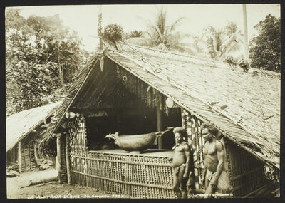 ' Gamal at Ahia - Ulawa - Solomons'