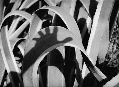 Res, 'Agave', 1986