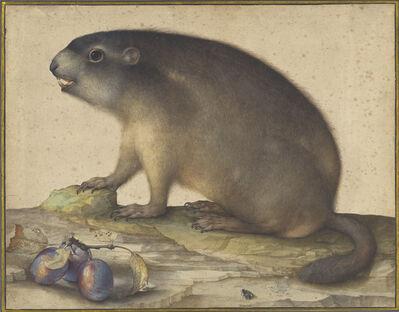 Jacopo Ligozzi, 'A Marmot with a Branch of Plums', 1605