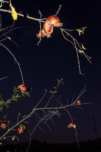 William Joe Josephs Radford, 'Pomegranates', 2020