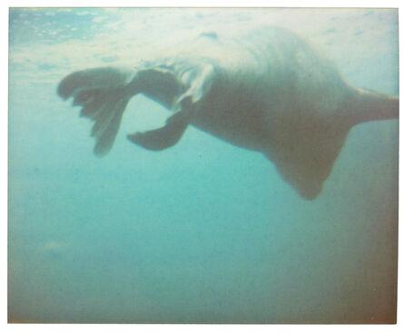 Stefanie Schneider, 'Dugong I - Contemporary, Abstract, Coney Island, Polaroid, photograph', 2006