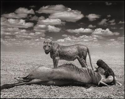 Nick Brandt, 'Lion & WIldebeest, Amboseli', 2012