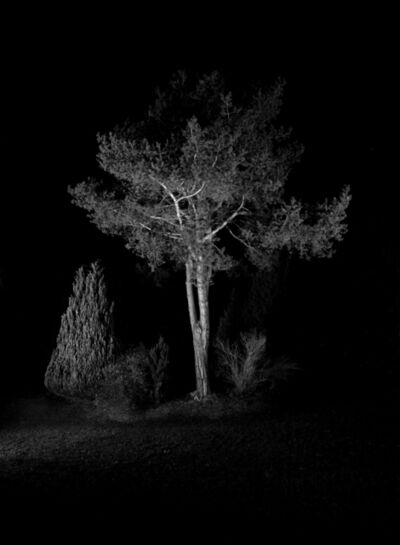 Herbert Weber, 'Behauptungen - Tree', 2010
