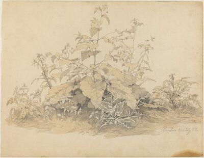 Johann Christian Heerdt, 'Wild Plants near Birstein', 1835