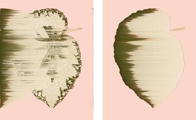 Andrea Wolf, 'Begonia Rex-Cultorum, vars. 042, 018', 2020