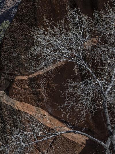 Peter Vanderwarker, 'Zion National Park Utah 3776', 2018