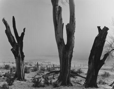 Ansel Adams, 'Dead Trees, Winter, Near Canyon City Nevada', ca. 1962
