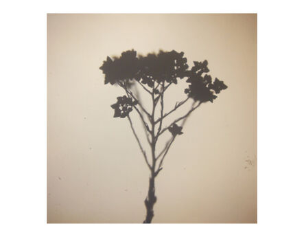 Caitlin Deibel, 'May Flowers', 2015