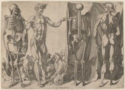 Domenico del Barbiere, 'Squelettes et Ecorches'