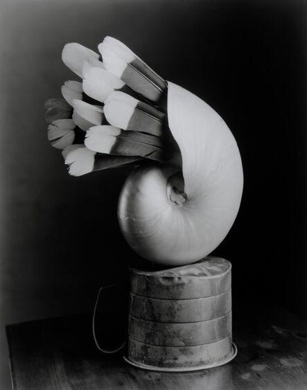 Robert Langham III, 'Feathered Nautilus', 2018