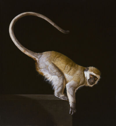 Patricia Traub, 'A Wild Savanna Vervet Monkey', 2015