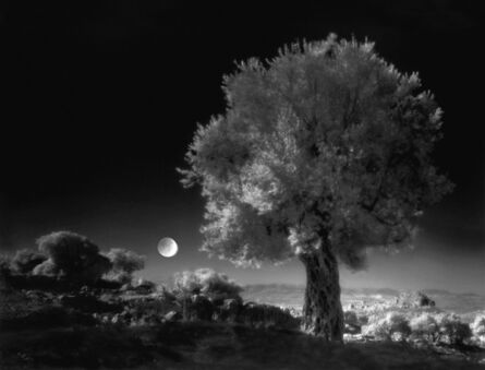 Neil Folberg, 'Olive Tree', 1997