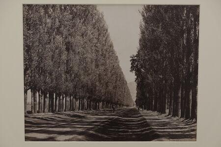 Samuel Bourne, 'Poplar Avenue, Srinuggur, India', 1864