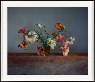 Richard Learoyd, 'Poppies in vase', 2020