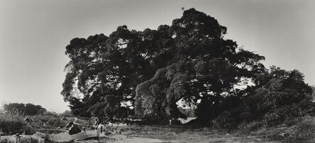 Simryn Gill, 'Scale or Tasha and the Tree', 2005-2014