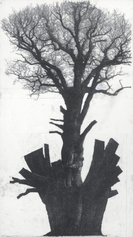 """Patrick Van Caeckenbergh, '""""Drawing of old trees on wintry days during 2007-2014""""', 2007 -2014"""