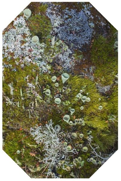 Maria Friberg, 'Mirroring Nature 9', 2019