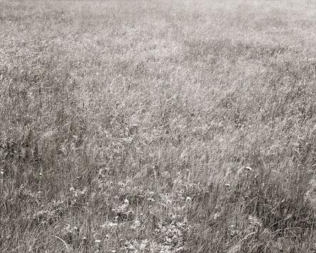 Linda Connor, 'Christina's Meadow', 2006