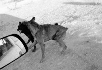 John Divola, 'Dogs Chasing My Car in the Desert, D18F35', 1996/2001