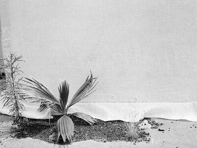 Melanie Schiff, 'Natives V', 2015