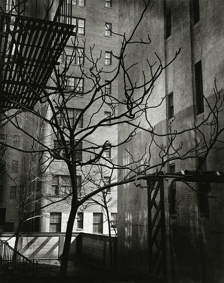 Brett Weston, 'Manhattan Courtyard', 1945-printed 1951