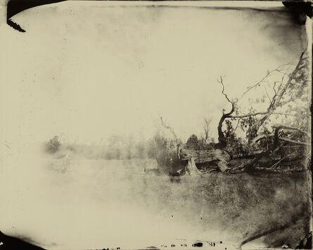 Sally Mann, 'Deep South, Untitled (Fallen Tree)', 1998