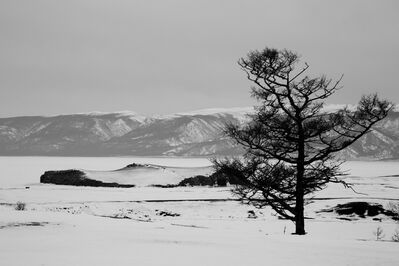 Matthew Webb, 'A lonely tree (Olkhon Island, Lake Baikal, Siberia)', 2013